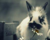 bunnies imagens de stock