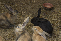 Bunnies Royalty Free Stock Photos