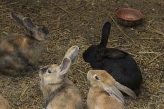 Bunnies. Brown Rabbit in a farm royalty free stock photos