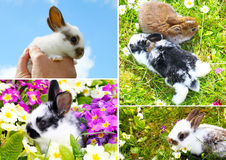 Bunnies children. Small easter bunnies Stock Image
