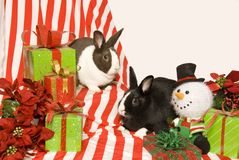 Bunnies and Christmas Gifts Stock Photography