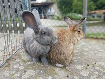 Bunnies. Close to eachotter stock images