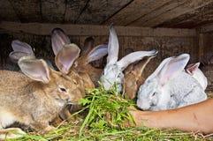 Bunnies eating Stock Photos