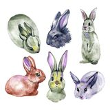 Bunnies. Farm animals. Watercolor drawing illustration isolated on white background.