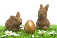 bunnies gras Στοκ Εικόνες