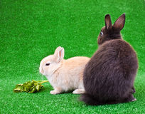 Bunnies on grass Stock Images
