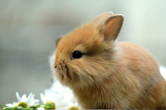 Bunnies. My little and beautiful bunnies Stock Photography