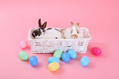 Bunnies on pink Stock Image