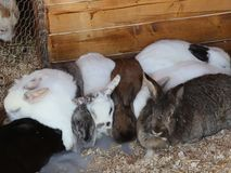Bunnies. Sit together on dry straw and sawdust