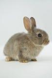 bunny ανασκόπησης λευκό Πάσχα&s Στοκ φωτογραφία με δικαίωμα ελεύθερης χρήσης
