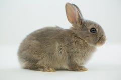 bunny ανασκόπησης λευκό Πάσχα&s Στοκ Φωτογραφίες