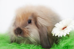 bunny αστείο Στοκ Εικόνα