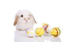 bunny αστείο Στοκ φωτογραφία με δικαίωμα ελεύθερης χρήσης