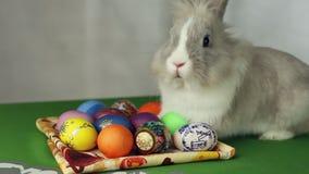 bunny αυγά Πάσχας φιλμ μικρού μήκους