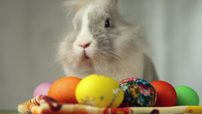 bunny αυγά Πάσχας απόθεμα βίντεο