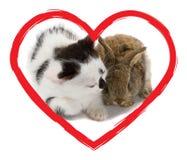 bunny γατάκι καρδιών στοκ φωτογραφία με δικαίωμα ελεύθερης χρήσης