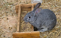 bunny γκρι Στοκ φωτογραφίες με δικαίωμα ελεύθερης χρήσης