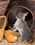 bunny εξερεύνηση στοκ εικόνα με δικαίωμα ελεύθερης χρήσης