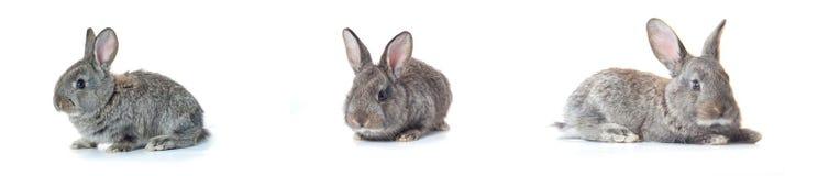 bunny λίγα στοκ εικόνες