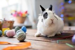 bunny λευκό Πάσχας Στοκ Εικόνες