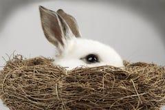 bunny λευκό φωλιών εσωτερικών Πάσχας Στοκ Εικόνες