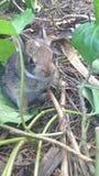 bunny μωρών νεογέννητη αυτοκόλλητη ετικέττα κουνελιών Στοκ Εικόνες