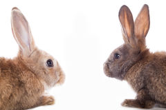 bunny μωρών χαριτωμένο τα κουνέλια μητέρων εκμετάλλευσής της Στοκ φωτογραφία με δικαίωμα ελεύθερης χρήσης