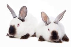 bunny μωρών χαριτωμένο τα κουνέλια μητέρων εκμετάλλευσής της Στοκ Φωτογραφία