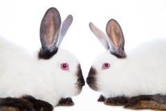 bunny μωρών χαριτωμένο τα κουνέλια μητέρων εκμετάλλευσής της Στοκ Φωτογραφίες