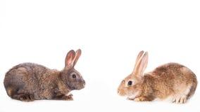 bunny μωρών χαριτωμένο τα κουνέλια μητέρων εκμετάλλευσής της Στοκ Εικόνες