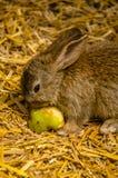 bunny μωρών χαριτωμένο Στοκ Εικόνα