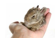 bunny μωρών Στοκ φωτογραφίες με δικαίωμα ελεύθερης χρήσης