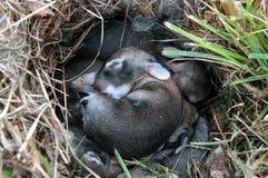 bunny μωρών