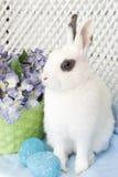 bunny νάνο λευκό Πάσχας Στοκ Φωτογραφίες
