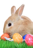 Bunny Πάσχας με τα αυγά Πάσχας στη χλόη Στοκ εικόνες με δικαίωμα ελεύθερης χρήσης