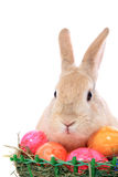 Bunny Πάσχας με τα αυγά Πάσχας Στοκ Φωτογραφία