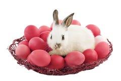 Bunny Πάσχας με τα κόκκινα αυγά Στοκ φωτογραφία με δικαίωμα ελεύθερης χρήσης