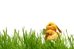 Bunny Πάσχας στη χλόη Στοκ Εικόνες