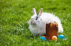 Bunny Πάσχας στο λιβάδι άνοιξη με το κέικ Πάσχας και τα χρωματισμένα αυγά Στοκ Εικόνες