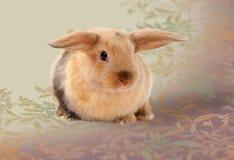 bunny Πάσχα Ένα ξηρό πρόγευμα σε ένα κουτάλι Στοκ Φωτογραφία