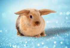bunny Πάσχα Ένα ξηρό πρόγευμα σε ένα κουτάλι Στοκ φωτογραφίες με δικαίωμα ελεύθερης χρήσης