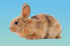 bunny Πάσχα Ένα ξηρό πρόγευμα σε ένα κουτάλι Στοκ Εικόνες