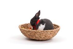 bunny Πάσχα απομόνωσε το λευ&kapp Στοκ Φωτογραφίες
