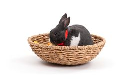 bunny Πάσχα απομόνωσε το λευ&kapp Στοκ εικόνα με δικαίωμα ελεύθερης χρήσης