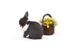 bunny Πάσχα απομόνωσε το λευ&kapp Στοκ φωτογραφία με δικαίωμα ελεύθερης χρήσης