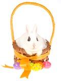 bunny Πάσχα καλαθιών μέσα στο λ& Στοκ εικόνα με δικαίωμα ελεύθερης χρήσης