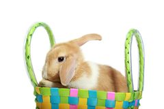 bunny Πάσχα καλαθιών Στοκ φωτογραφία με δικαίωμα ελεύθερης χρήσης