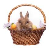 bunny Πάσχα καλαθιών Στοκ εικόνες με δικαίωμα ελεύθερης χρήσης