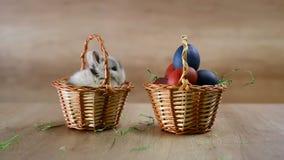 Bunny σε ένα καλάθι Πάσχα ευτυχές απόθεμα βίντεο
