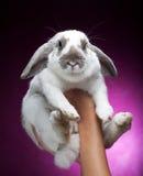 Bunny στη ρόδινη ανασκόπηση στοκ εικόνα με δικαίωμα ελεύθερης χρήσης